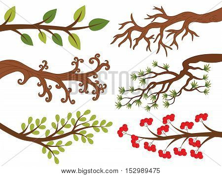 Vector tree branches with leaves, ash berries  pine needle