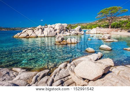 Famous Pine Tree On Palombaggia Beach With Azure Clear Water And Sandy Beach On The South Part Of Co
