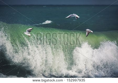White seagull soaring above the sea waves