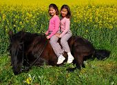 twins sisters and their friend black stallion laid down poster
