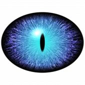Isolated blue eye. Big elliptic eye with striped iris and dark thin elliptic pupil with dark retina. poster