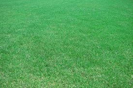 Beautiful green grass. Outdoors, pasture, pattern, plant.