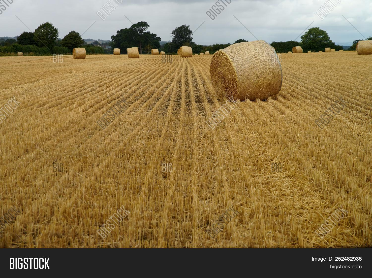 Stubble Field Straw Image Photo Free Trial Bigstock