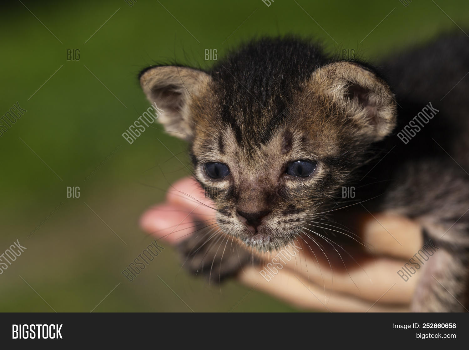 Cute Newborn Kitten On Image \u0026 Photo (Free Trial)