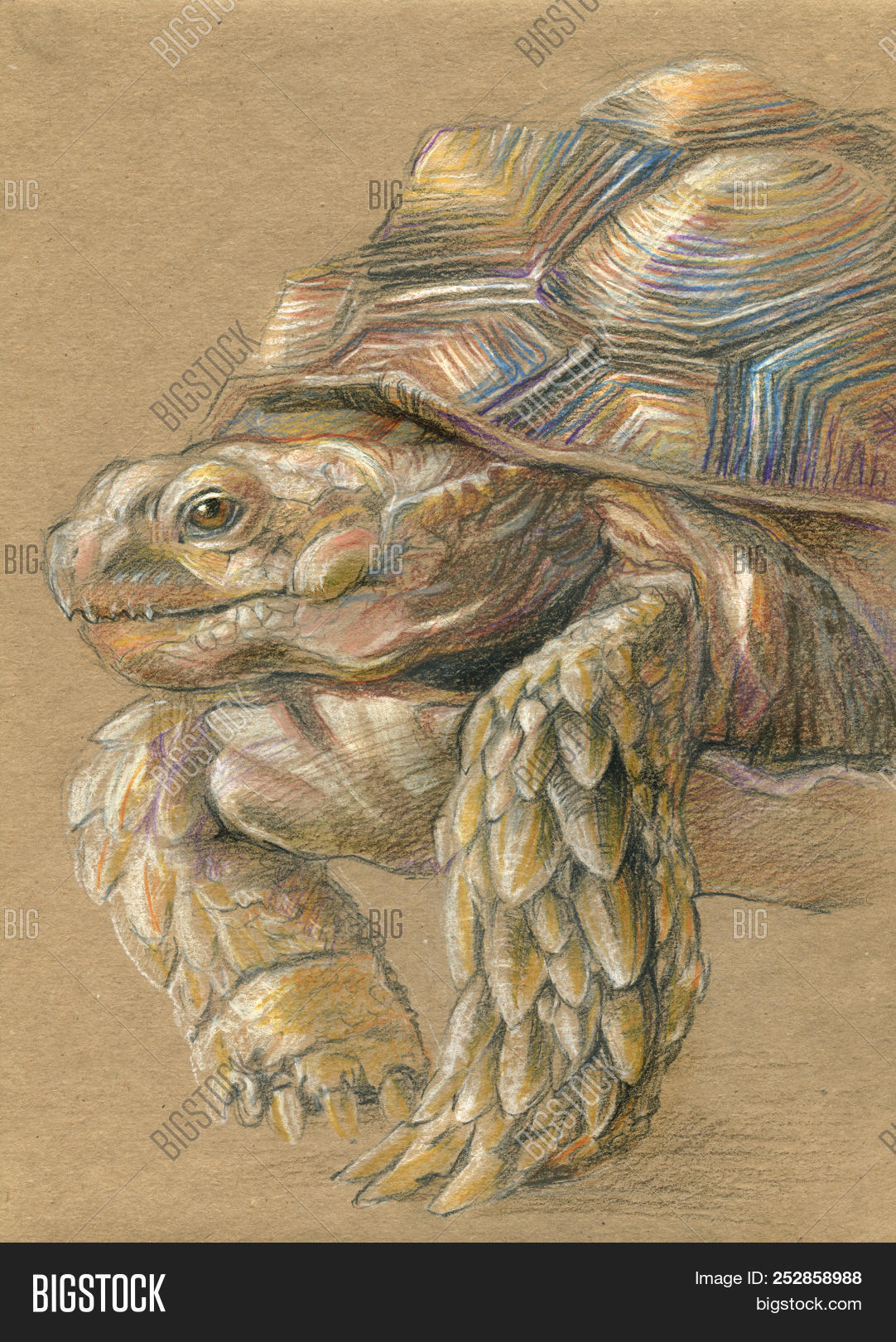 Old wise tortoise image photo free trial bigstock