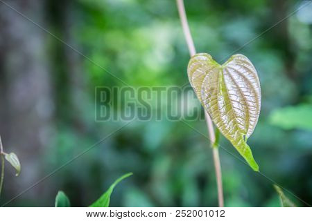 Natural Background Green From Nature Background  Natural Branches. Green Leaf After The Rain Beautif