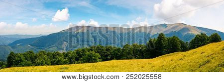 Panoramic Scene Of A Summer Landscape. Beautiful View Of A Beech Forest On A Grassy Meadow And Dista