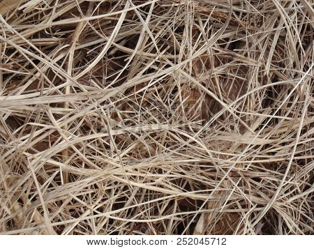 Dry Straw On Wood, Pattern Contrast, Light Brown