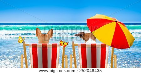 Dog Resting And Relaxing On A Hammock Or Beach Chair Under Umbrella At The Beach Ocean Shore, On Sum