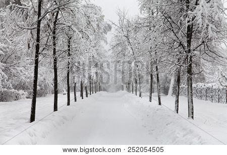 Snowfall In The Park, Snowy Winter Road, Snow Covered Trees Landscape. Cold Season Winter Weather Co