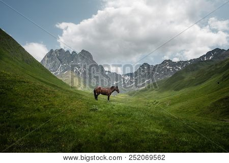 Mountain Landscape With A Horse Grazing In A Mountain Valley And The Chaukhi Mountain Range In Georg
