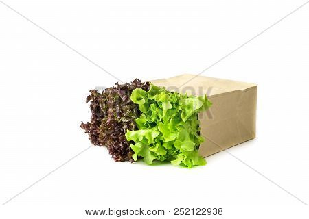 Grocery Bag With Fresh Hydroponics Vegetables Isolated On White Background