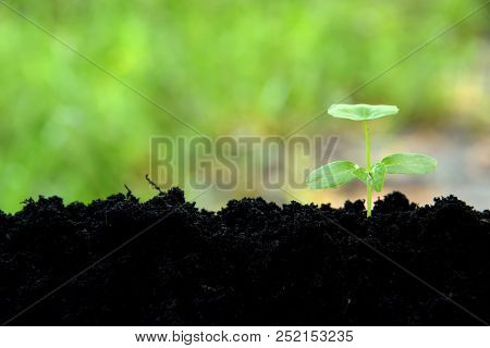 Young Plant Growing In Black Soil On Green Nature Background, Young Plant Put In Low Right, Young Pl