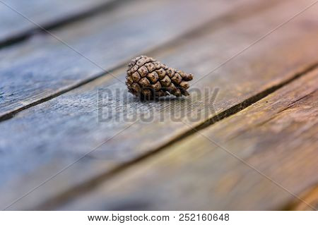 Young Conifer Cone On Wooden Background Macro
