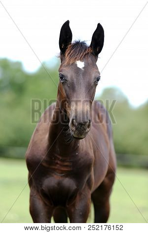 Thoroughbred youngster posing on the green meadow summertime. Portrait of a purebred young horse on summer pasture. Closeup of a young domestic horse on natural background outdoors rural scene poster