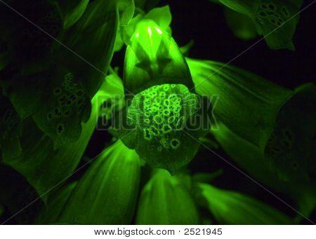 Glowing Foxtail Flower