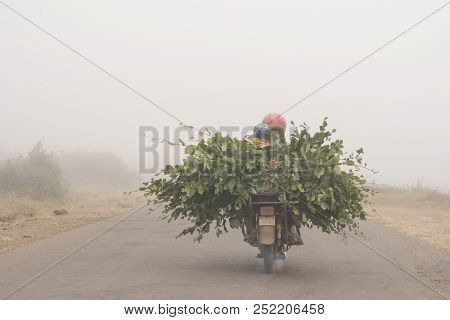 Mountain Side Road, Motorcycle Driving With Cut Branches Through Fogy Road, Gilan Province