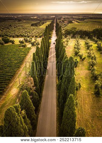 Cypress alley with rural country road, Tuscany, Italy