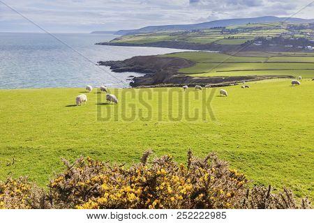 Spring Panorama Of Isle Of Man. Isle Of Man.