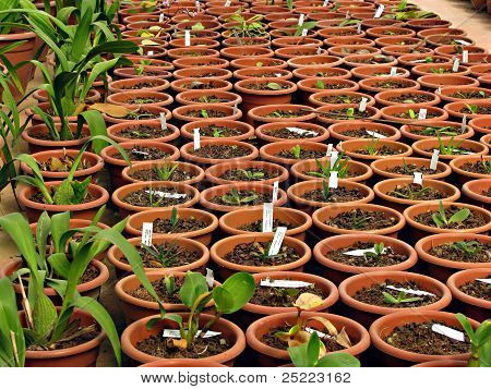 Sprouting plants in a greenhouse