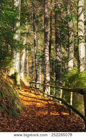 Forest Path Covered In Weathered Foliage. Wooden Fence Along The Edge. Beautiful Autumn Scene In Eve