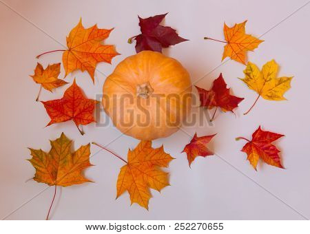 Colorful Autumn Pattern Made Of Pumpkin And Maple Leaves. Fall Concept.