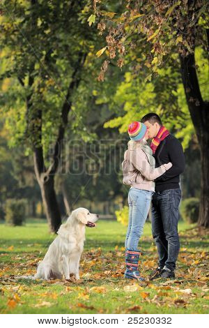 Boyfriend and girlfriend kissing in the park and a labrador retreiver dog watching them
