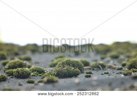 Landscape With Old Moss, Lichen. Natural Background With Gray Dirty Moss, Grass, Lichen Growing On T