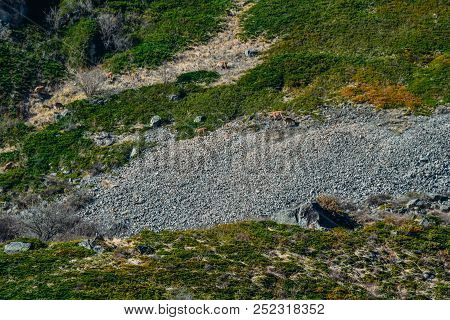 Stone Terrain In The Mountains And Animals