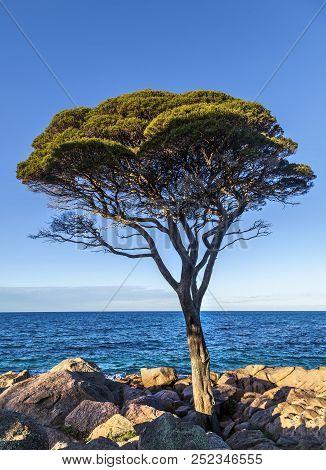 Tree On The Coast At Bunker Bay In Dunsborough, Western Australia, Australia.