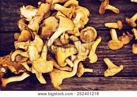 Mushrooms Chanterelle In The Basket