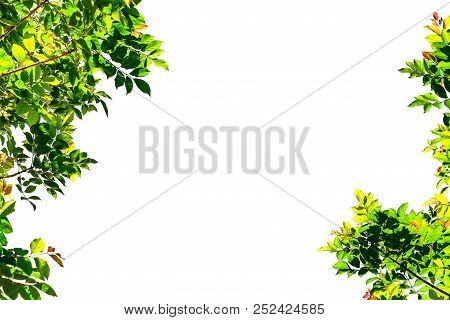 Isolated Simple Normal Tree On White Background, Set Of Tree Collection