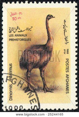 Dinornis Maximus