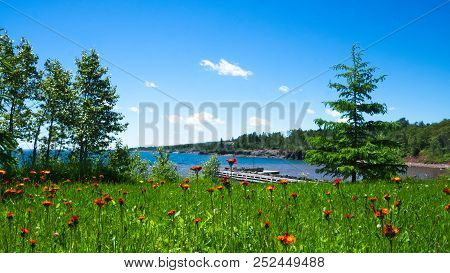 Beautiful Wild Flowers Growing Near The North Shore Of Lake Superior In Minnesota On A Sunny Day.