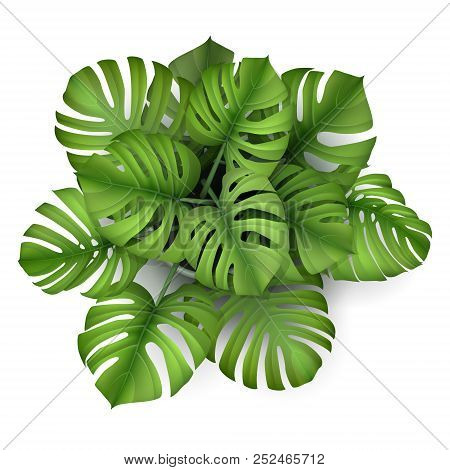 Monstera Plant In A Pot, Top View. Houseplant For Decorating The Worktop. Vector 3d Realistic Style.