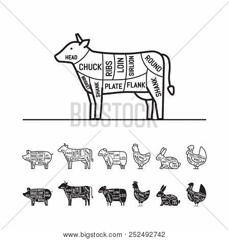 Diagrams For Butcher Shop - Cow. Meat Cuts. Animal Silhouette, Pig, Cow, Lamb, Chicken, Turkey, Rabb