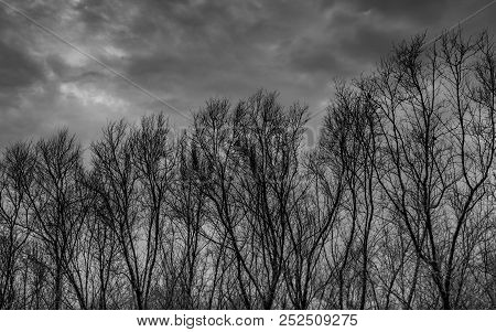Silhouette Dead Tree  On Dark Dramatic Grey Sky And Clouds Background For  Scary, Death, And Peace C