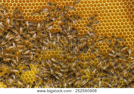 Bees Hard Working Gluing Up Fresh Honey Lying In Honeycombs