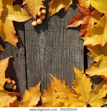 Yellow Autumn Leaves Of Maple And Mini Apple In Circle Pattern On Woooden  Rustic Background
