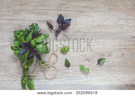 Parsley And Basil Bunch Of Bouquets On Light Wooden Surface. Top View, Copy Space.