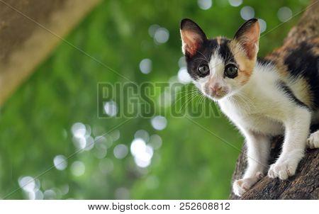 Calico Kitten Cat Catch On Tree, Cute Kitten Cat, Little Kitten Cat, Cute Pussycat, Calico Pussycat,