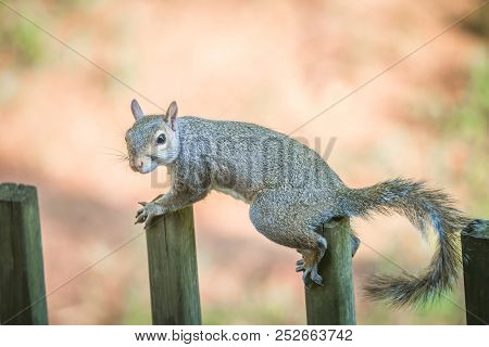 A Tiny Squirrel On A Wooden Fence