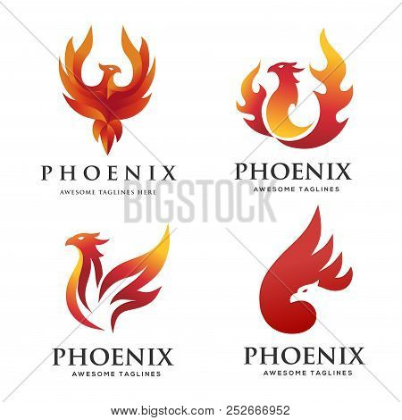 Luxury Phoenix Logo Concept, Best Phoenix Bird Logo Design, Phoenix Vector Logo,creative Logo Of Myt