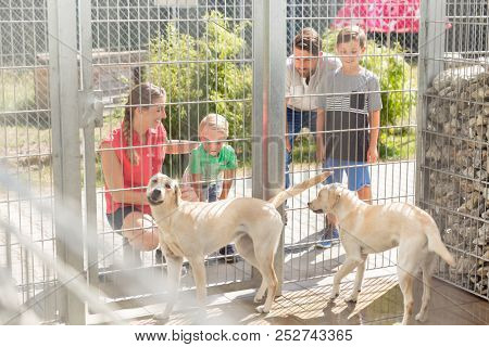 Family getting to know two dogs in animal shelter