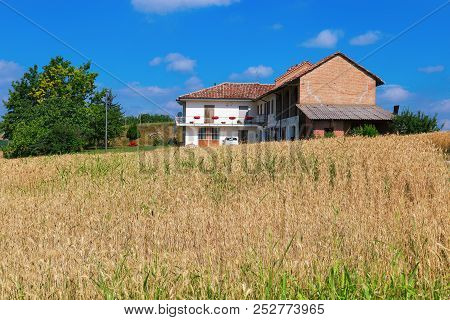Italian Rural Landscape. House In The Countryside Located In The Region Of Alba In Italy. Wheat Fiel