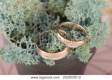 Wedding Rings With Moss. Forest Wedding Concept. Pink And Blue Pastel Tonned