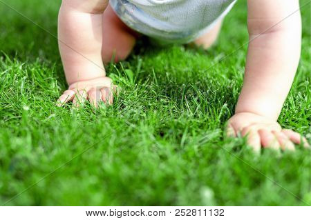 Close-up Baby Crowling Through Green Grass Lawn. Details Infant Hand Walking In Park . Child Discove