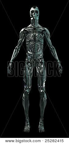 Cyborg Human Skeleton Android 3D