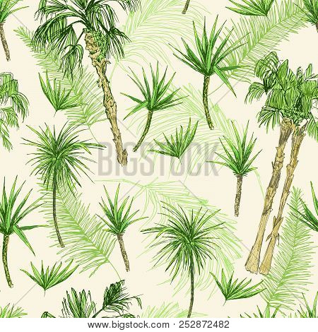 Palmtrees Seamless Pattern. Green Coconut Or Queen Palm Trees With Leaves. Beach And Rainforest, Des