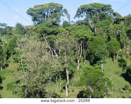 Vegetation Landschaft